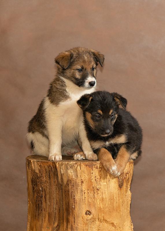 Недавно подброшенные щенки
